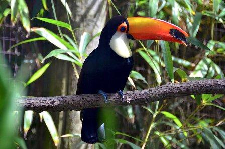 работни оферти за Aramark Cape May Zoo за бригада в САЩ