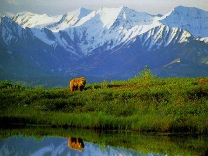 Работни оферти за Aramark Denali Park Village, Alaska